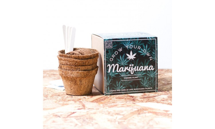 "Kasvatuskomplekt ""Grow Your Own Marijuana"""